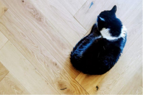 Picking the Perfect Pet-Proof Flooring
