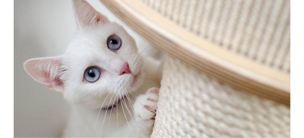 cat using scratching post