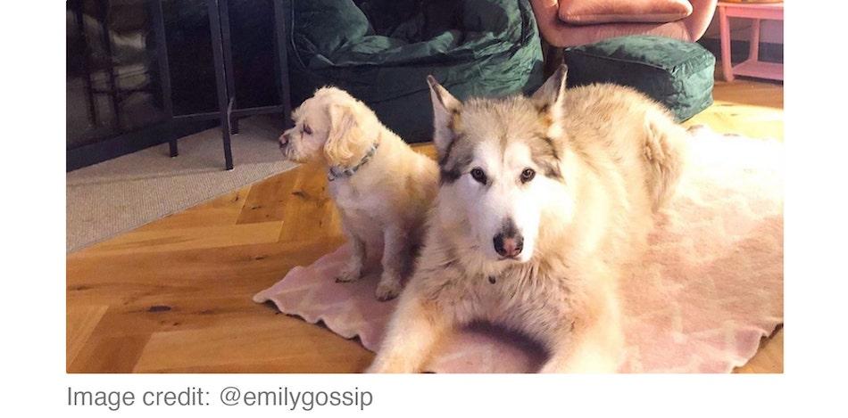 two dogs lying on rug