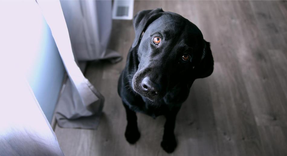 black dog on floor