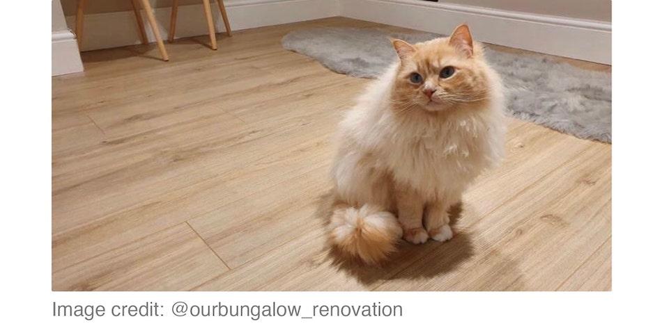 snug with neutral coloured carpet